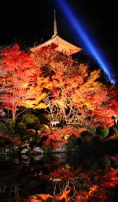 清水寺の夜の特別拝観